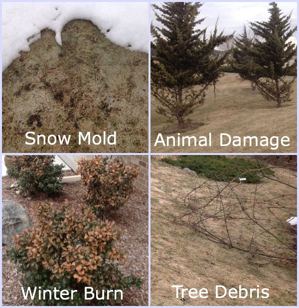 """If Your Yard Looks Like This, You Need """"The Works"""""""