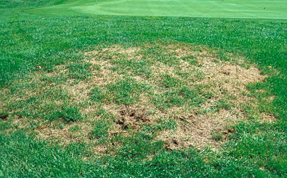 "Grub Control is a ""Must Have"" for Your Lawn Care Program"