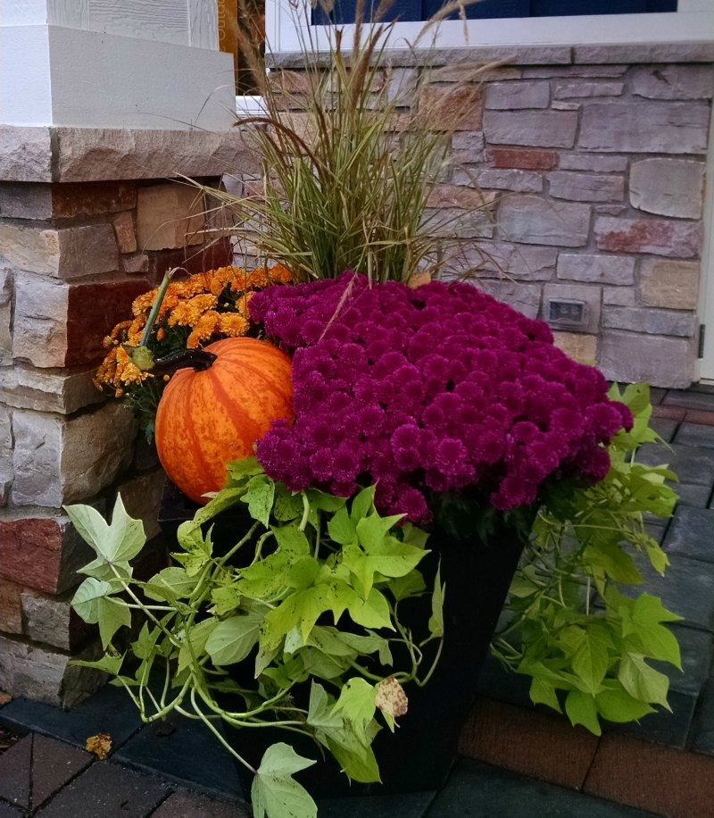 Add Seasonal Color with Fall Container Gardens
