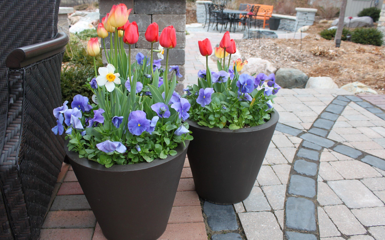 Spring Container Gardens